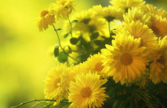 Mơ thấy hoa màu vàng điềm báo gì đánh số gì thì trúng lớn